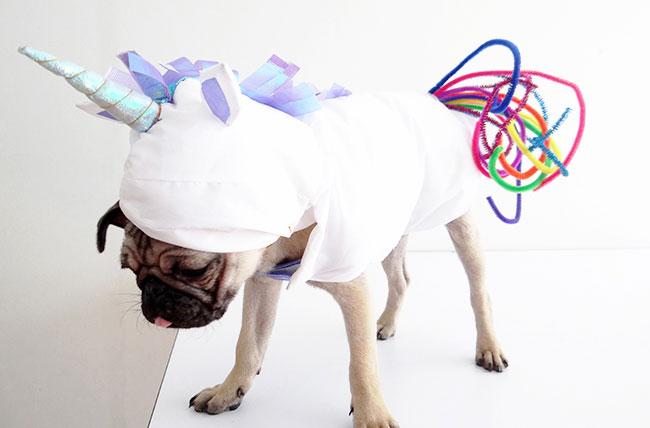 disfraces de carnaval diferentes y geniales para dultos, niños y mascotas