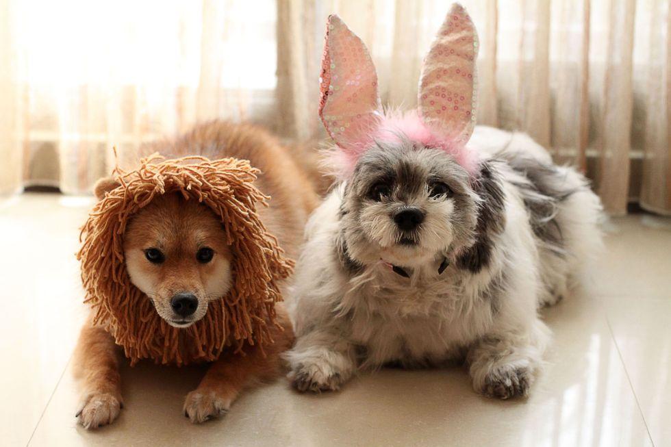 ideas disfraces perros