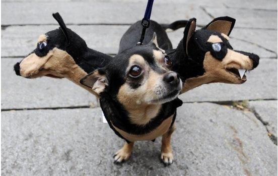 disfraz diy perro