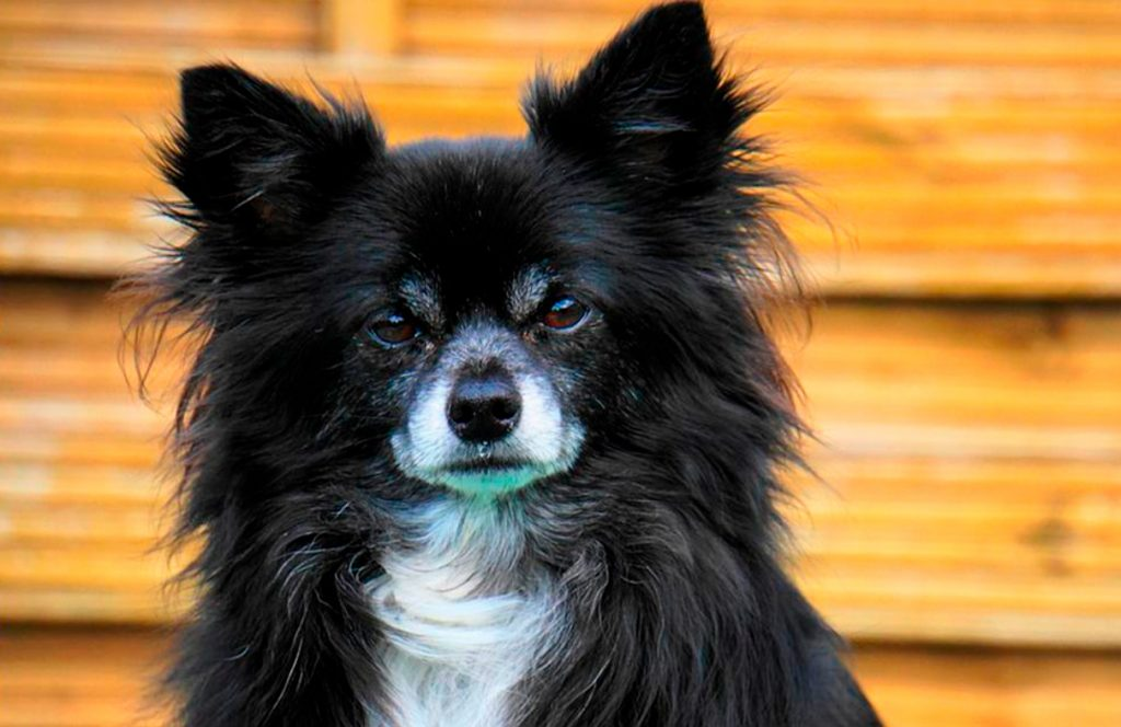 Lola, la perrita de Nilda
