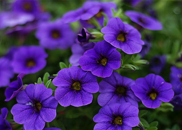 Plantas resistentes al frío y al calor fáciles de cuidar de exterior