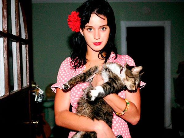 Estos famosos aman a sus gatos