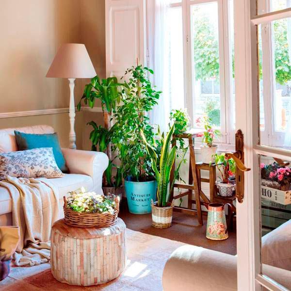 plantas y flores en casa hogar más acogedor