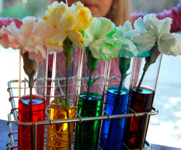 Experimento con flores